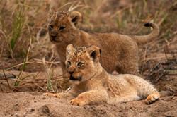 Our heritage; Where all the luxury safari magic happens