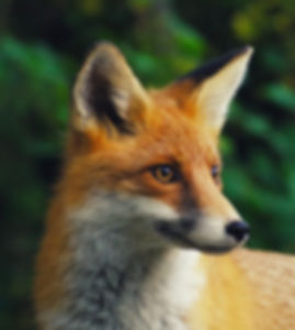 Fox workshop.jpg