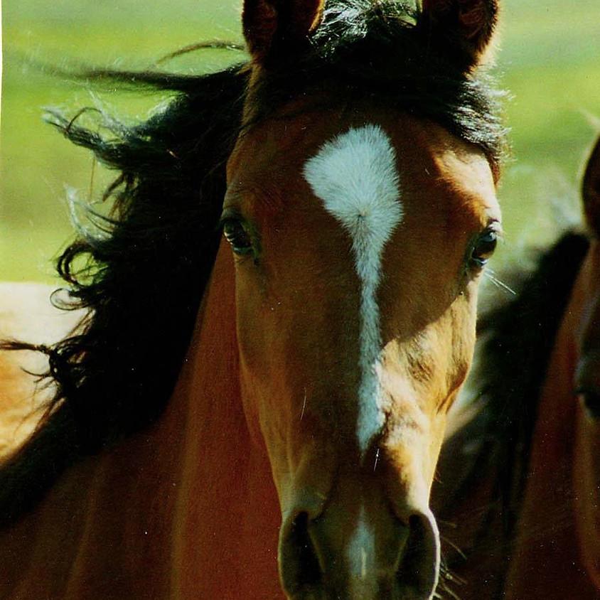 Pretty Arab Equine Portrait Painting Class with J Douglas