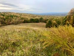 Salvatori, Stephanie-Golden fields