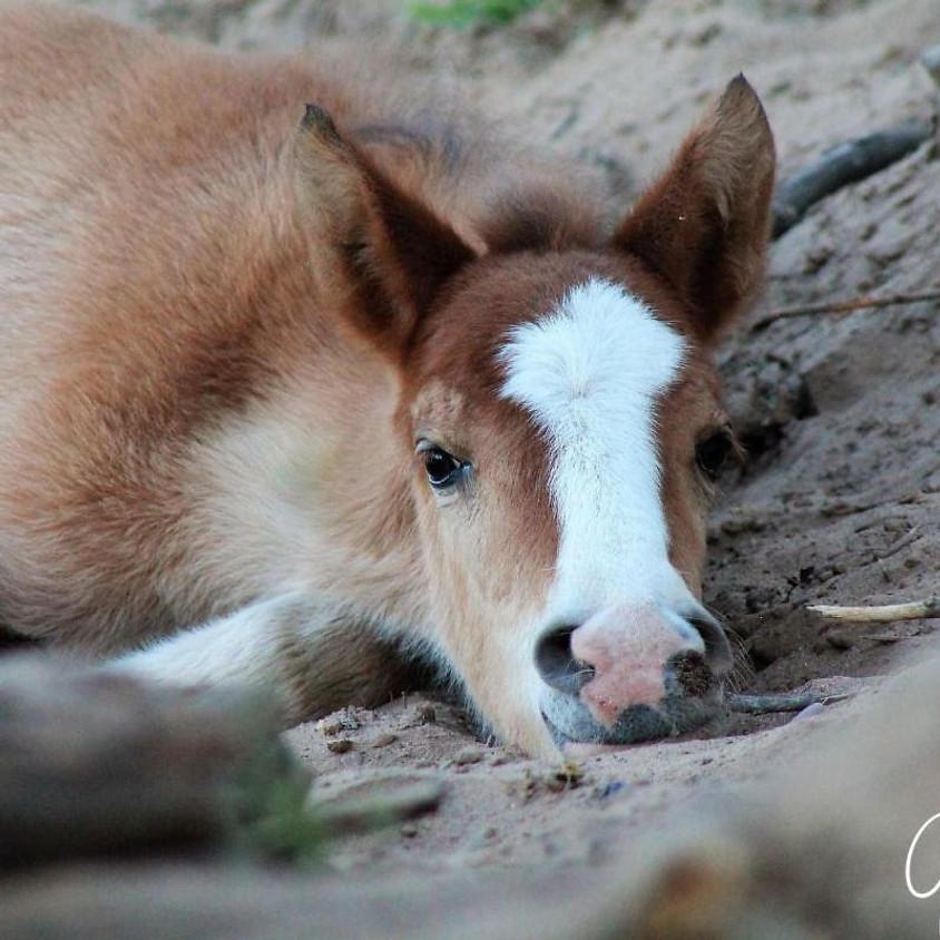Free Virtual Beginner's Art Class: The Foal