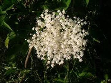 Organic Elder Flowers - 4 ounces