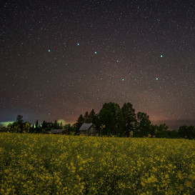The Big Dipper over Canola field