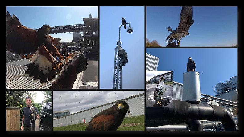 Hawk photo montage.jpg