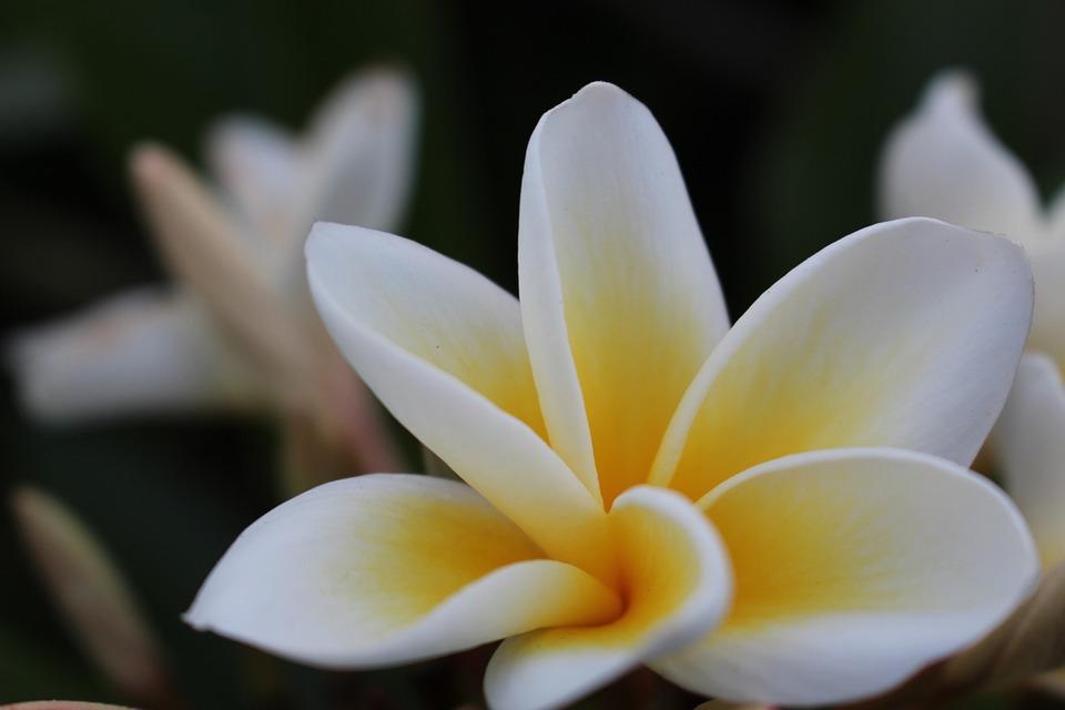 Éteri virág