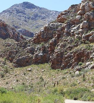 Cape Mountains Fynbos Karoo
