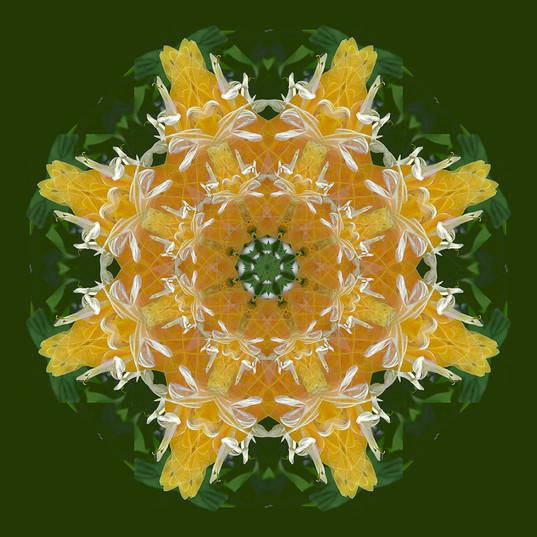 Elaine Bacal_Circle of Sun Ra.jpg