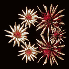 02_Elaine Bacal_Fireworks flowers (James