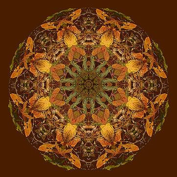 Elaine Bacal_Mystic Autumn.jpg