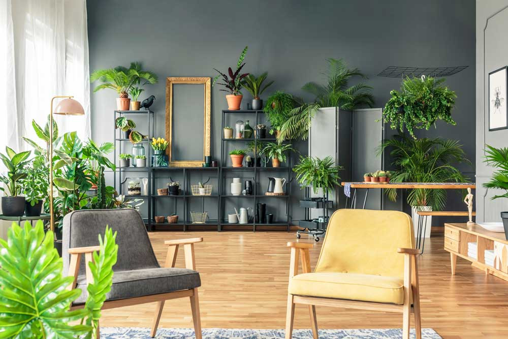indoor plants accessory upgrade living room revamp space life brixel architecture budget