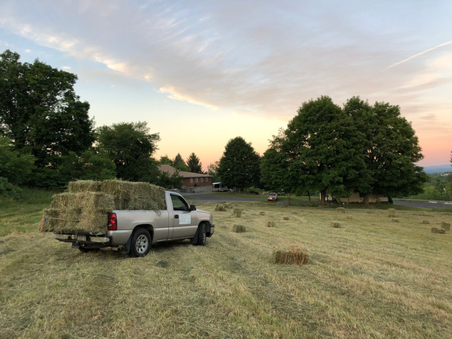 Hay Harvest June 2018