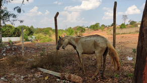 Fiscalização fecha abatedouro clandestino suspeito de vender carne de cavalo a açougues