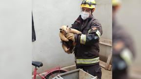 Bombeiros registram movimento de 'abraço' de tamanduá-mirim ao soltá-lo em mata após resgate