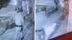 PM mata cadela a tiros após abordagem em casa de Aparecida de Goiânia