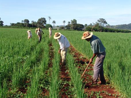 Governo anuncia benefícios para a agricultura familiar em Goiás