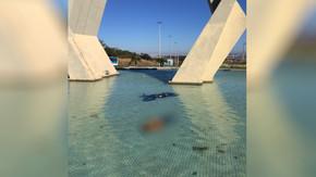 Motociclista morre após sofrer acidente e cair em espelho d'água de monumento em Senador Canedo