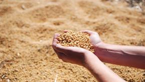 VBP da agropecuária deve atingir R$ 93,6 bilhões