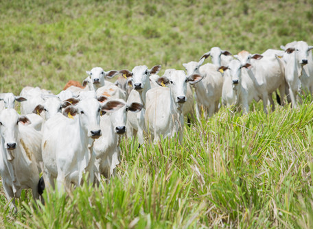 Governo de Goiás publica análise sobre os impactos da Covid-19 no setor agropecuário