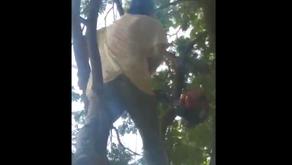 Em Pontalina vídeo viraliza nas redes sociais onde mostra poda de uma árvore