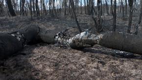 Dia Nacional do Cerrado: bioma já perdeu 50% da vegetação original