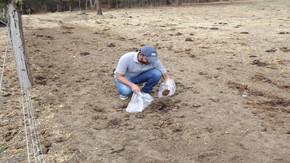 UEG pesquisa fungos que decompõem excrementos