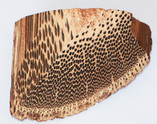 Carpentaria Palm