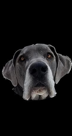 Blu, Dog Tahoe, Chief Woofer