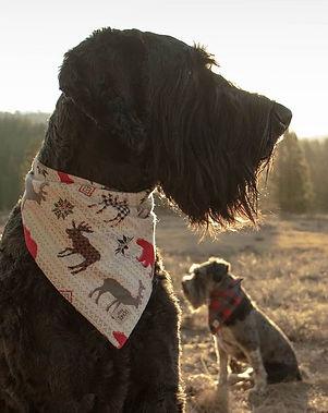 Moose Mountain Flannel.jpg