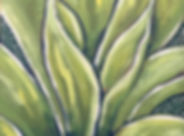 Agave in Green