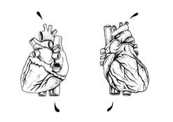 Cœur anatomique