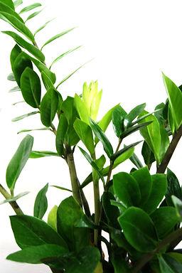 Plantes 3.jpg