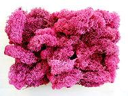 Lichen rose.jpg