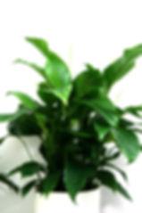 Plantes 6.jpg