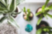 houseplants-792091_1920.jpg