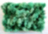 Lichen pacific.jpg