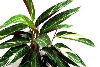 Plantes 5.jpg