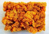 Lichen orange.jpg