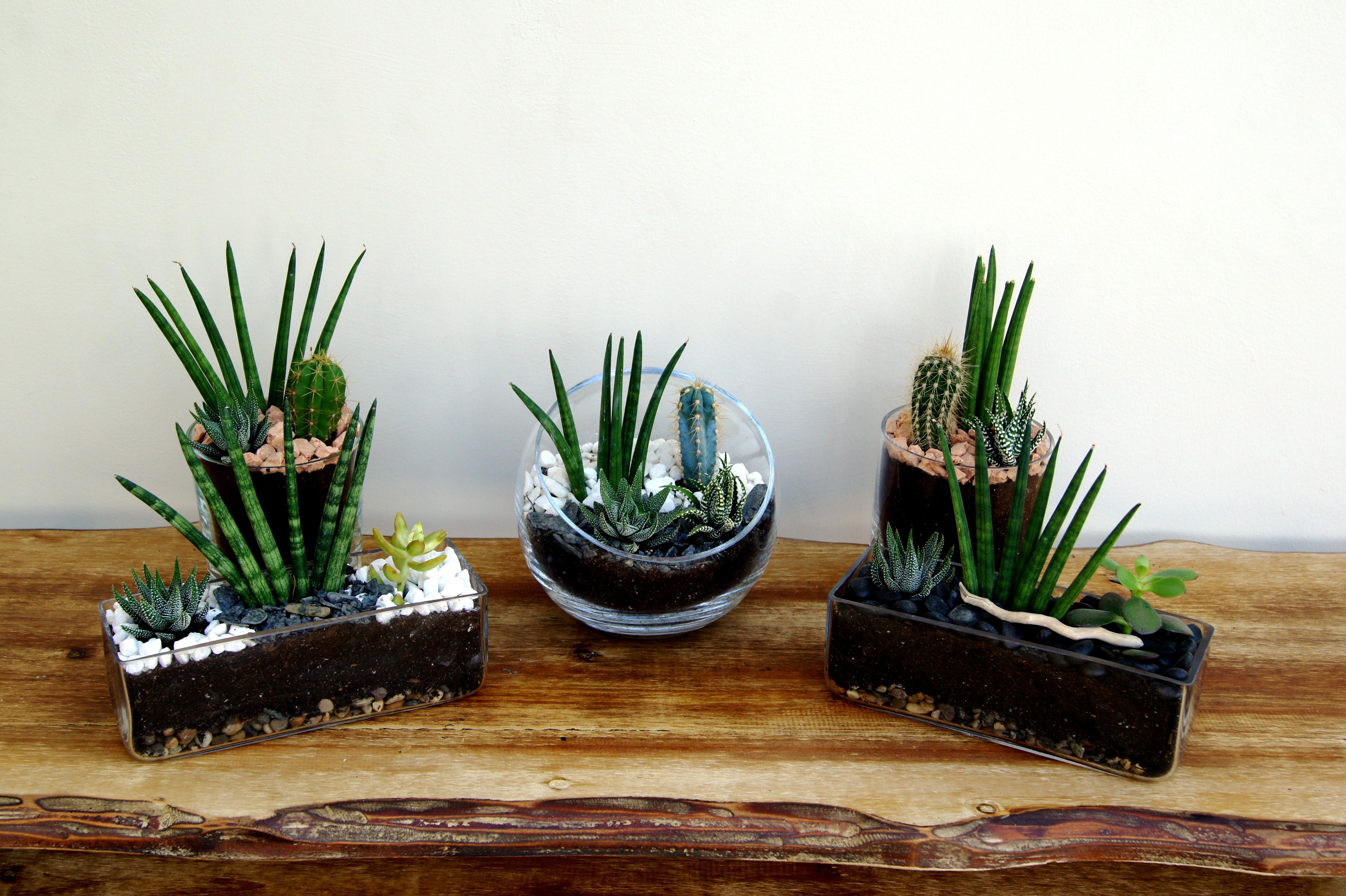 Frambois'in succulentes