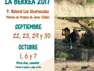 La berrea, un espectáculo natural