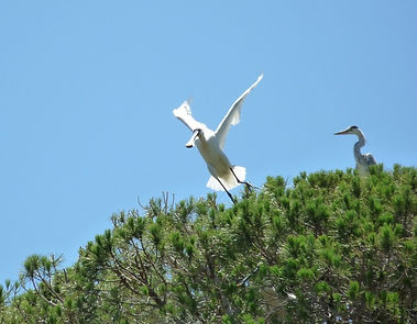Observación de aves, birdwatching en la provincia de Cádiz