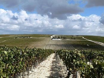 Ruta por viñedo en el marco Jerez