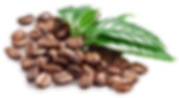 Coffee-Beans-PNG-Image_edited.png