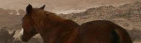 איסוף בקר בציר הנפט ליד קלע אלון, מצוק עורבים