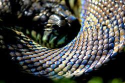IMG_3529 snake.JPG