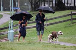 IMG_1808 umbrellas n dogs.JPG
