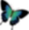 butterfly-1299922__340.png