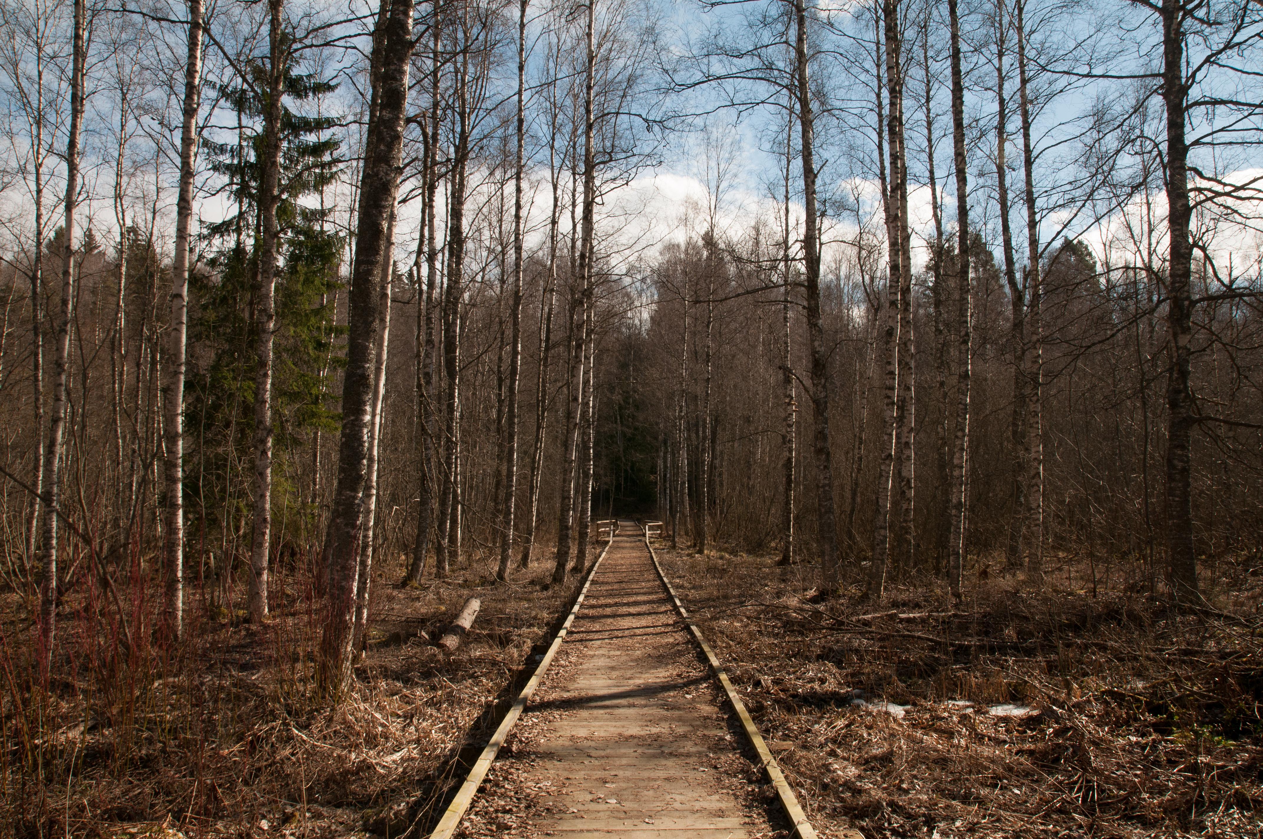 Holzsteg Schweden