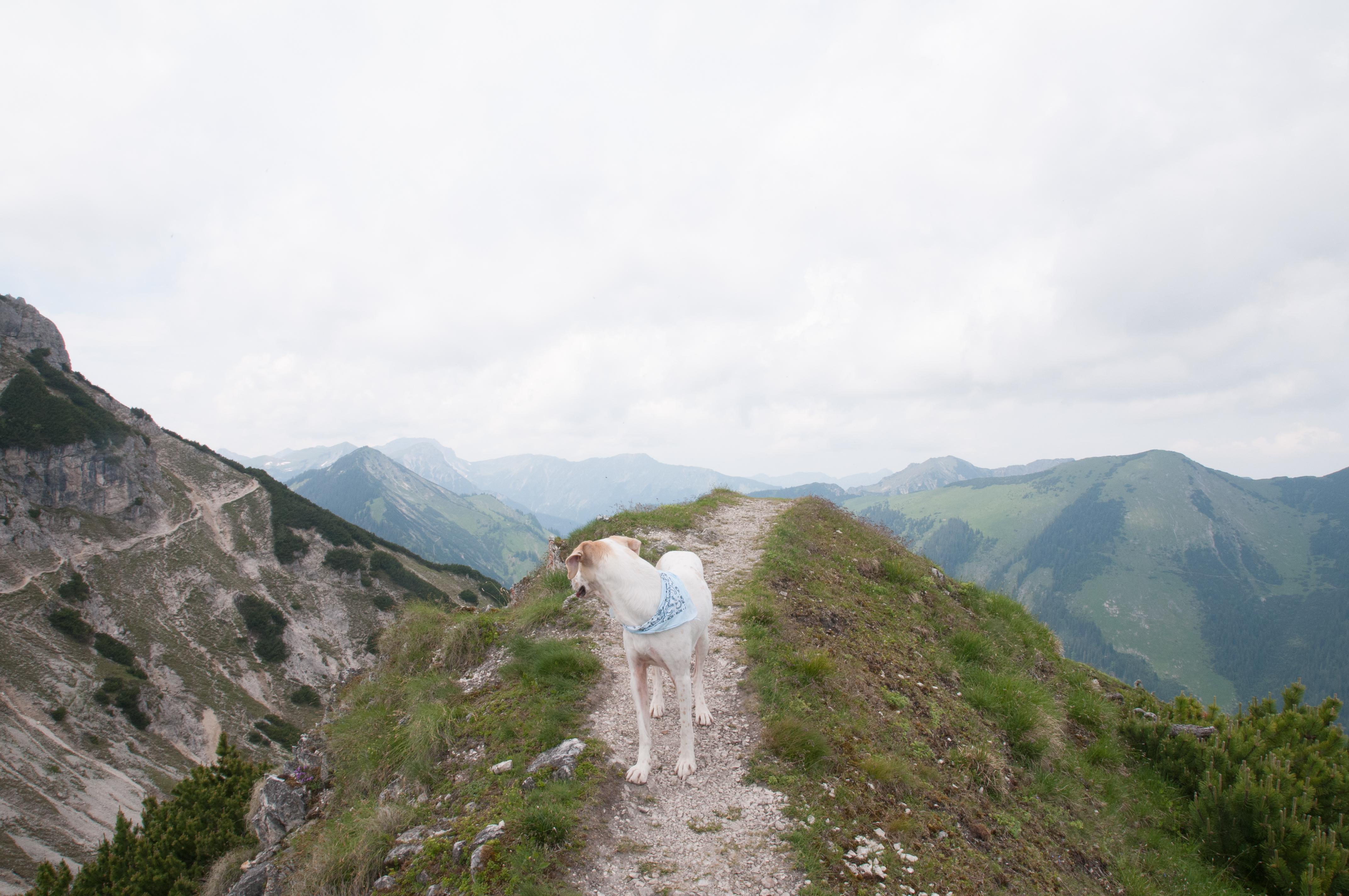 Bilka in den Bergen