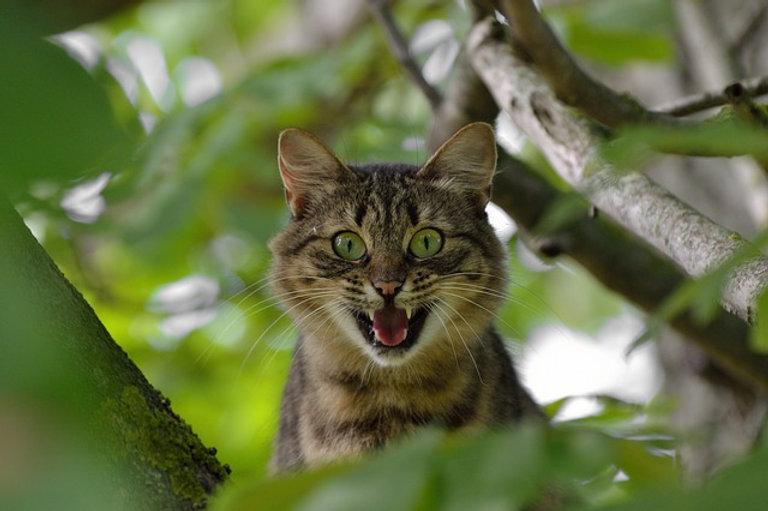 cat-1641959_640.jpg