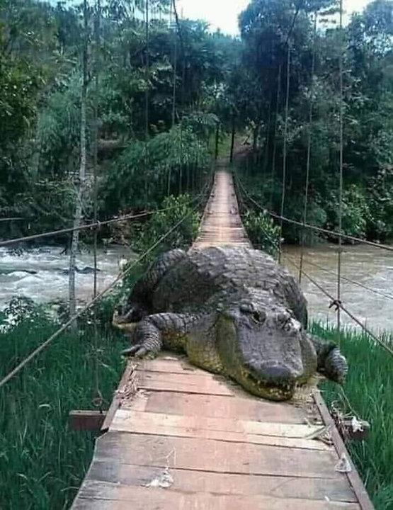 gator101.jpg
